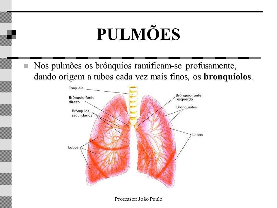 PULMÕES Nos pulmões os brônquios ramificam-se profusamente, dando origem a tubos cada vez mais finos, os bronquíolos.