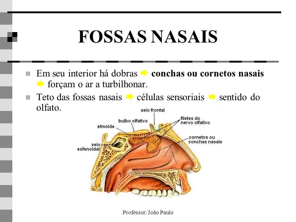 FOSSAS NASAIS Em seu interior há dobras  conchas ou cornetos nasais  forçam o ar a turbilhonar.