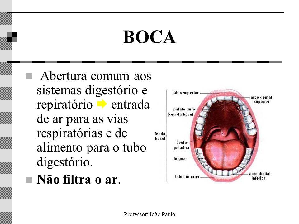 BOCA Abertura comum aos sistemas digestório e repiratório  entrada de ar para as vias respiratórias e de alimento para o tubo digestório.