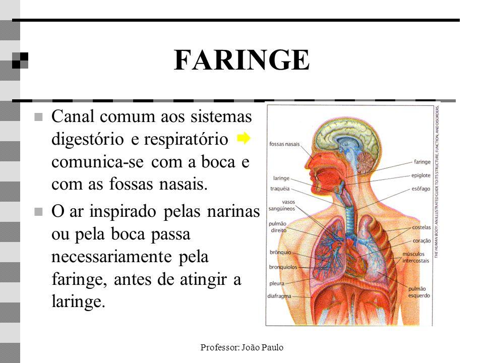 FARINGE Canal comum aos sistemas digestório e respiratório  comunica-se com a boca e com as fossas nasais.