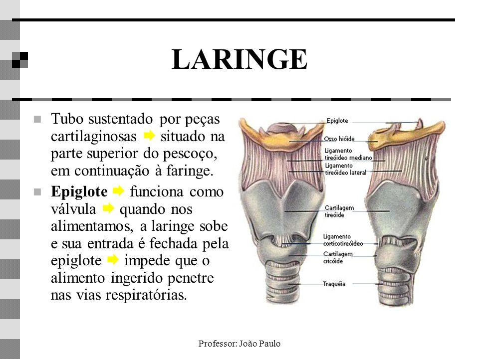 LARINGE Tubo sustentado por peças cartilaginosas  situado na parte superior do pescoço, em continuação à faringe.