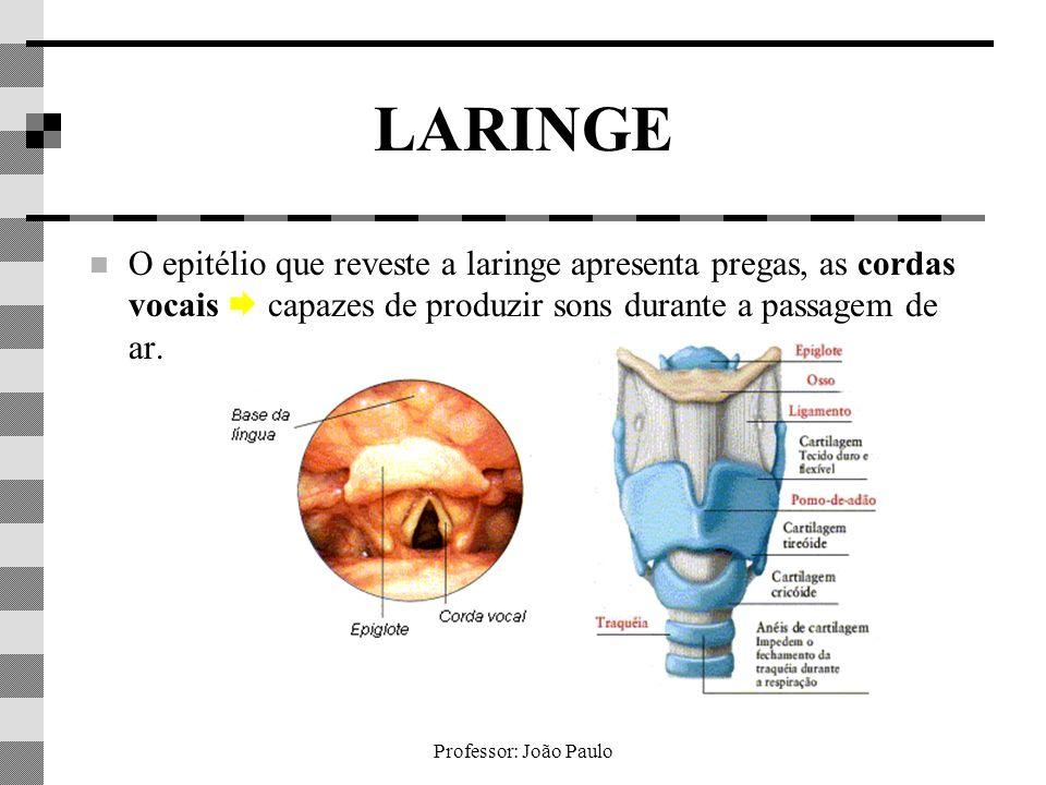 LARINGE O epitélio que reveste a laringe apresenta pregas, as cordas vocais  capazes de produzir sons durante a passagem de ar.
