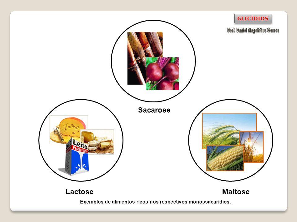 Sacarose Lactose Maltose