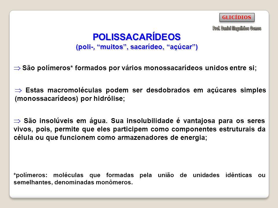 POLISSACARÍDEOS (poli-, muitos , sacarídeo, açúcar )