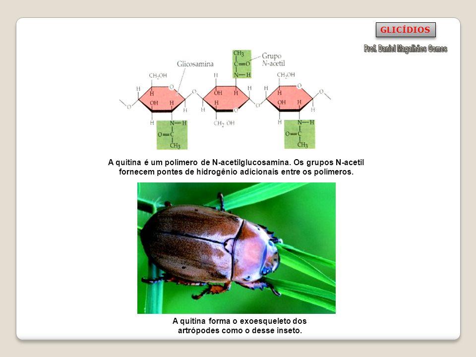 A quitina forma o exoesqueleto dos artrópodes como o desse inseto.