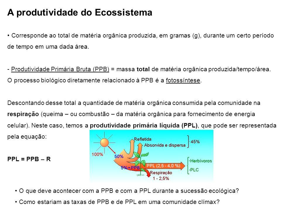 A produtividade do Ecossistema