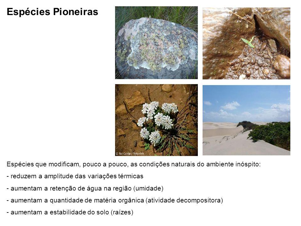 Espécies Pioneiras Espécies que modificam, pouco a pouco, as condições naturais do ambiente inóspito: