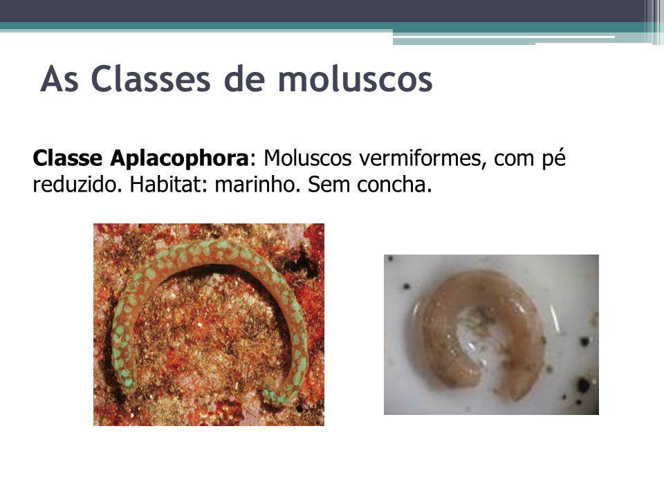 As Classes de moluscosClasse Aplacophora: Moluscos vermiformes, com pé reduzido.