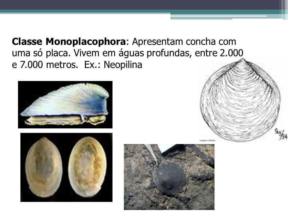 Classe Monoplacophora: Apresentam concha com uma só placa