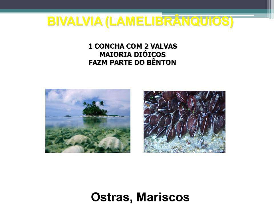 BIVALVIA (LAMELIBRÂNQUIOS)