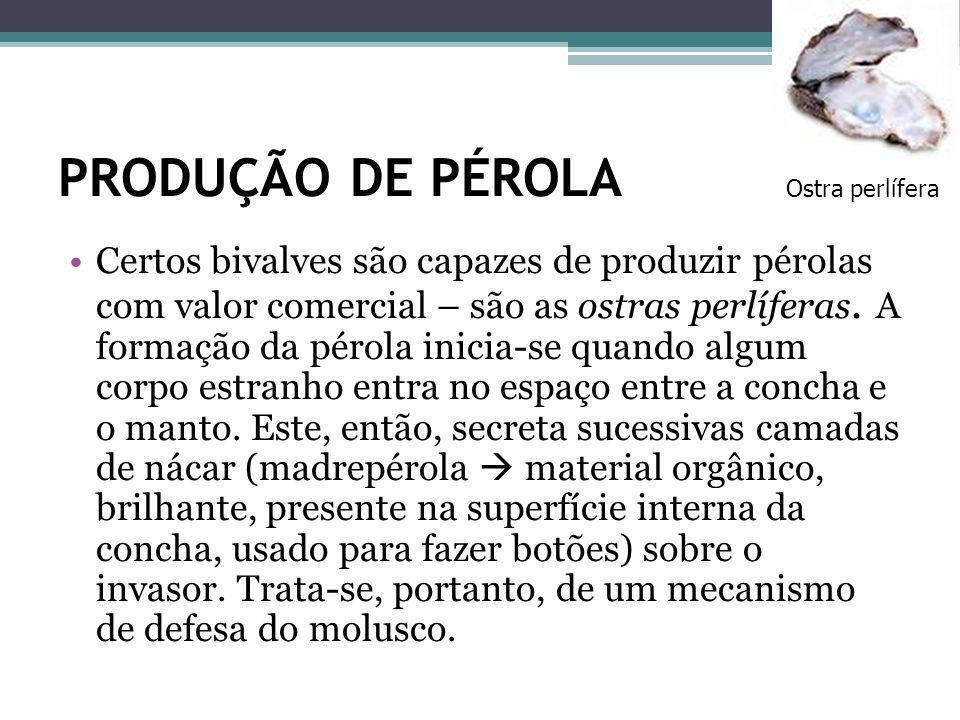 Ostra perlífera PRODUÇÃO DE PÉROLA.