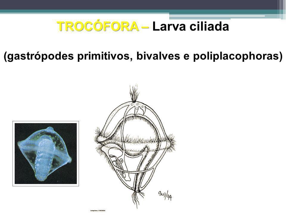 TROCÓFORA – Larva ciliada