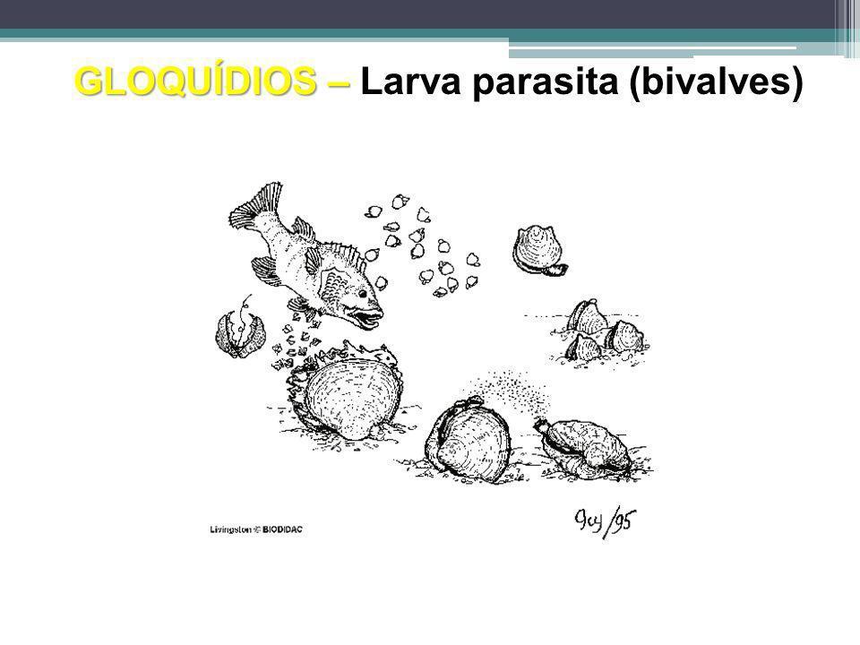 GLOQUÍDIOS – Larva parasita (bivalves)