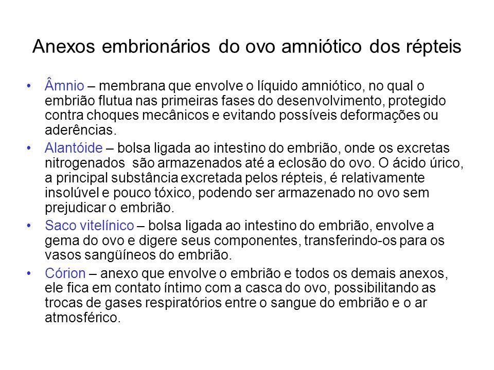 Anexos embrionários do ovo amniótico dos répteis