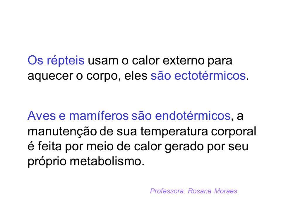Os répteis usam o calor externo para aquecer o corpo, eles são ectotérmicos.