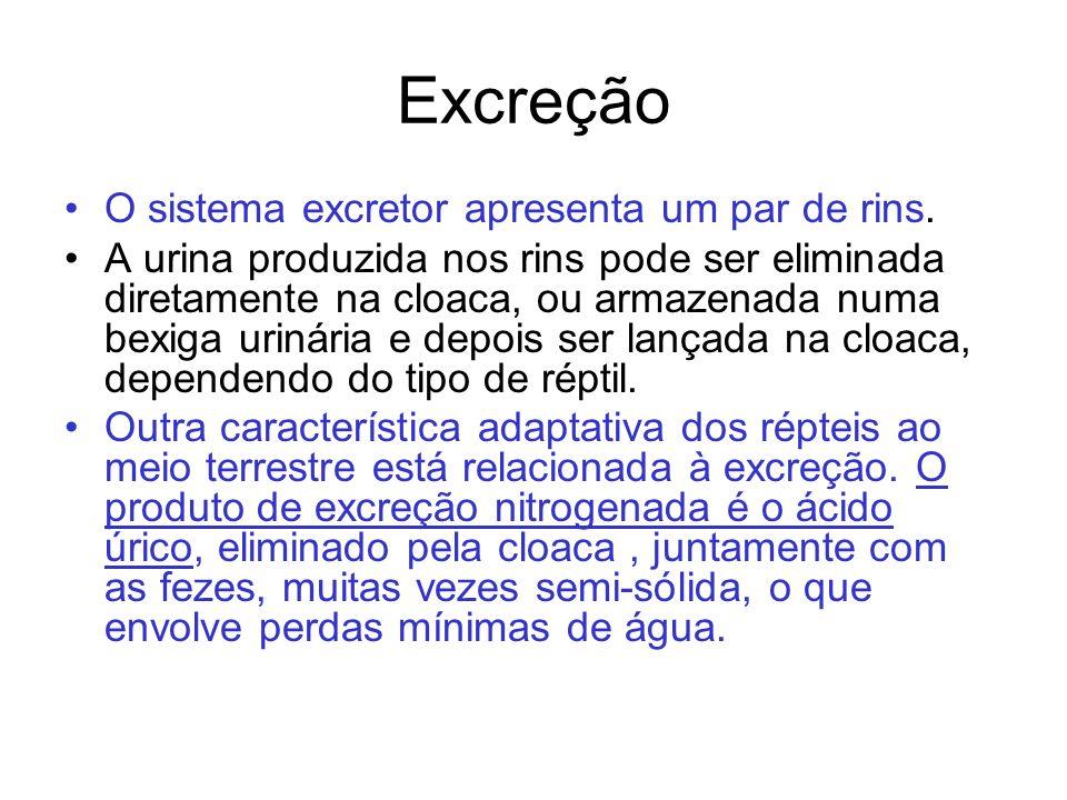 Excreção O sistema excretor apresenta um par de rins.