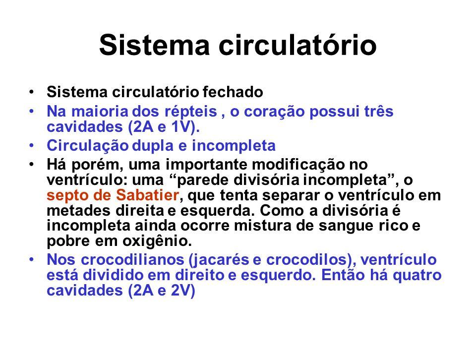 Sistema circulatório Sistema circulatório fechado