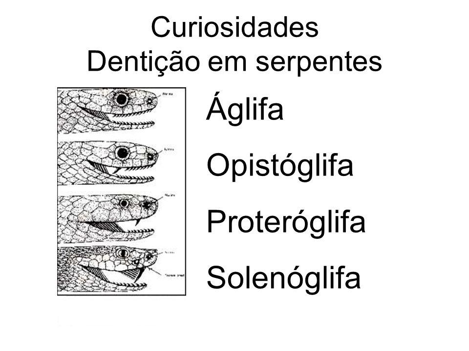 Curiosidades Dentição em serpentes