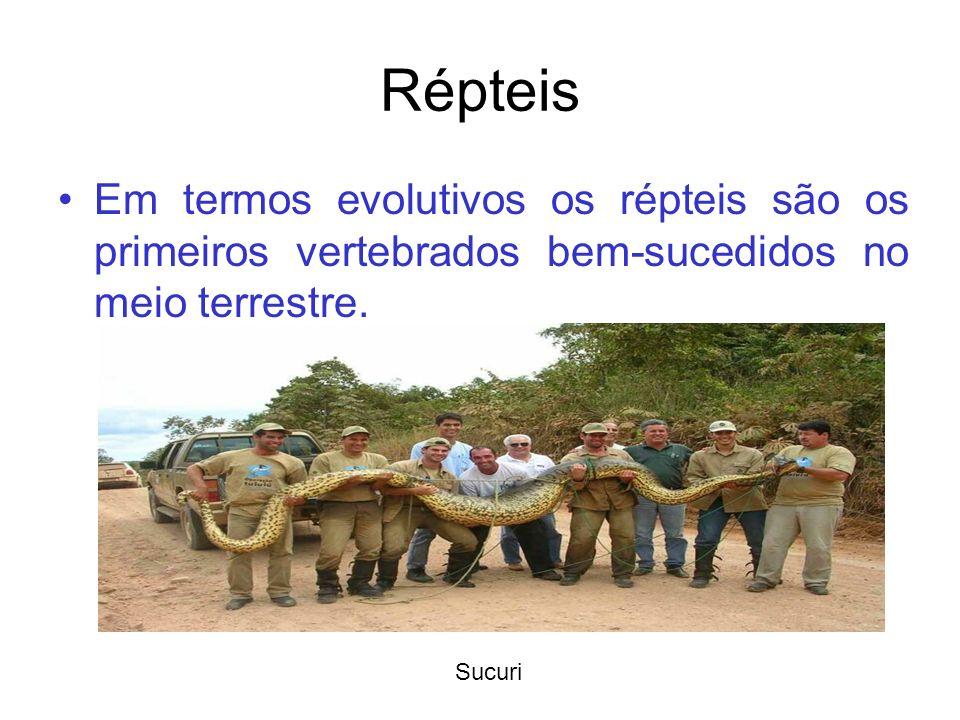 Répteis Em termos evolutivos os répteis são os primeiros vertebrados bem-sucedidos no meio terrestre.