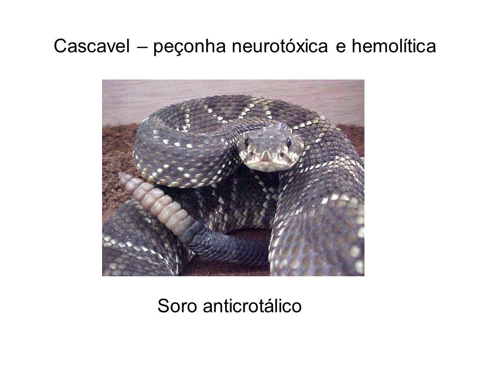 Cascavel – peçonha neurotóxica e hemolítica