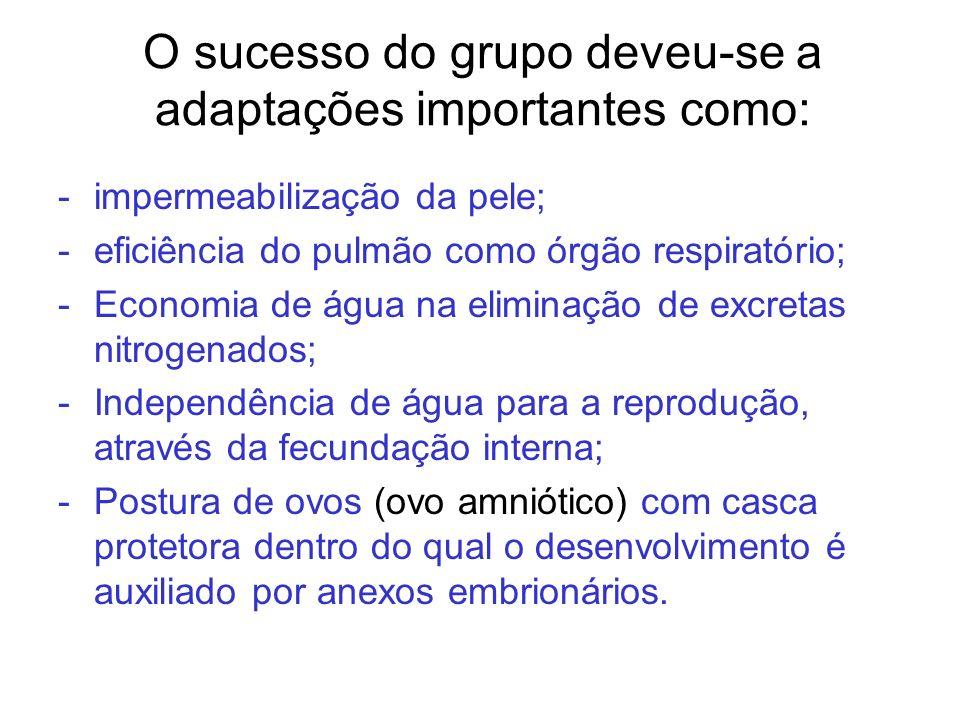 O sucesso do grupo deveu-se a adaptações importantes como: