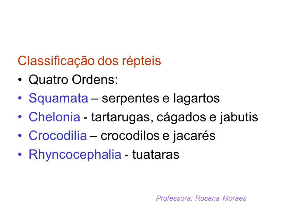 Classificação dos répteis Quatro Ordens: