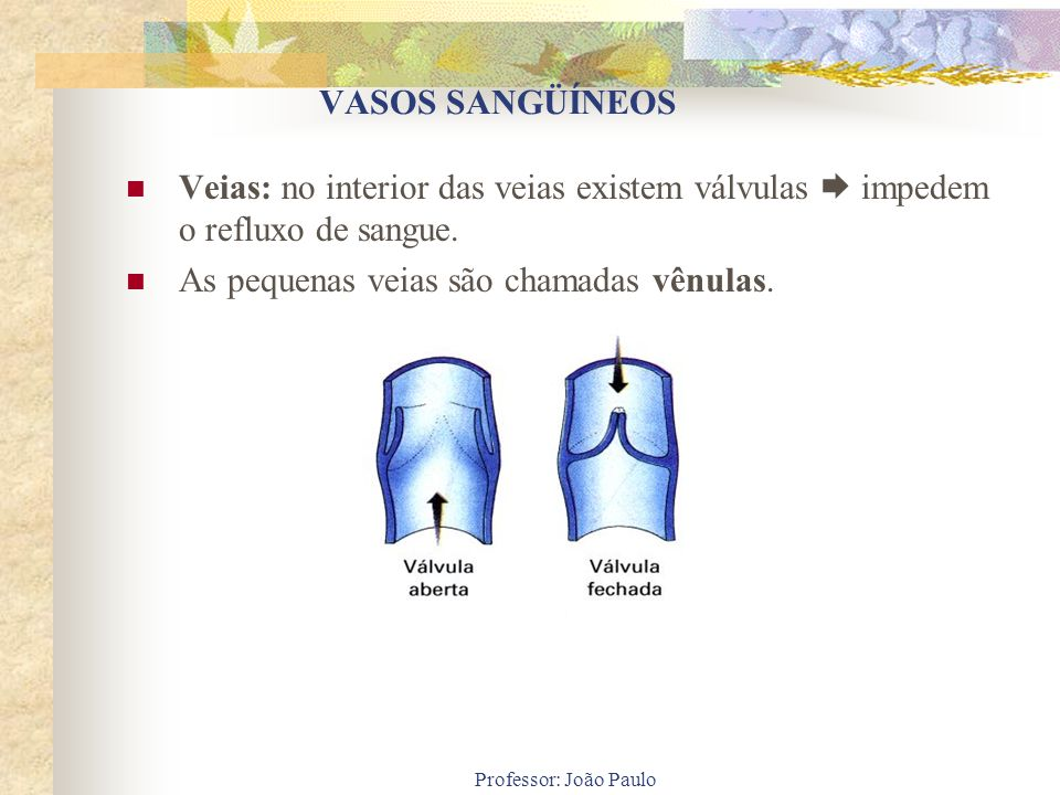 As pequenas veias são chamadas vênulas.