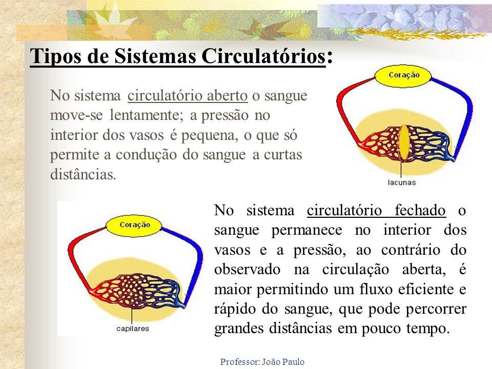 Tipos de Sistemas Circulatórios: