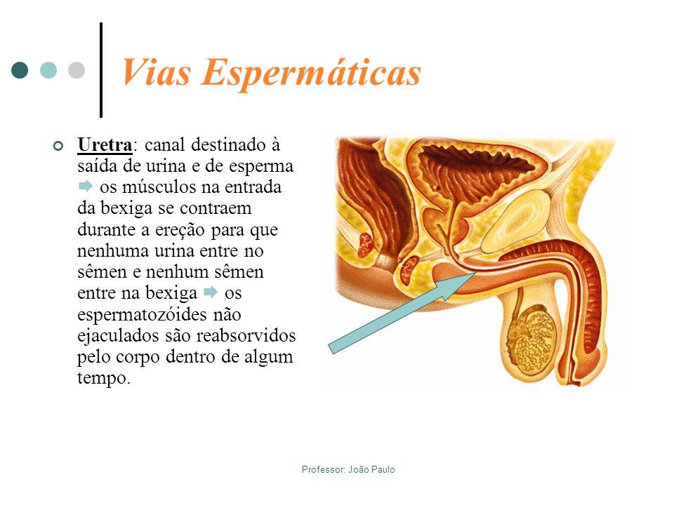 Vias Espermáticas