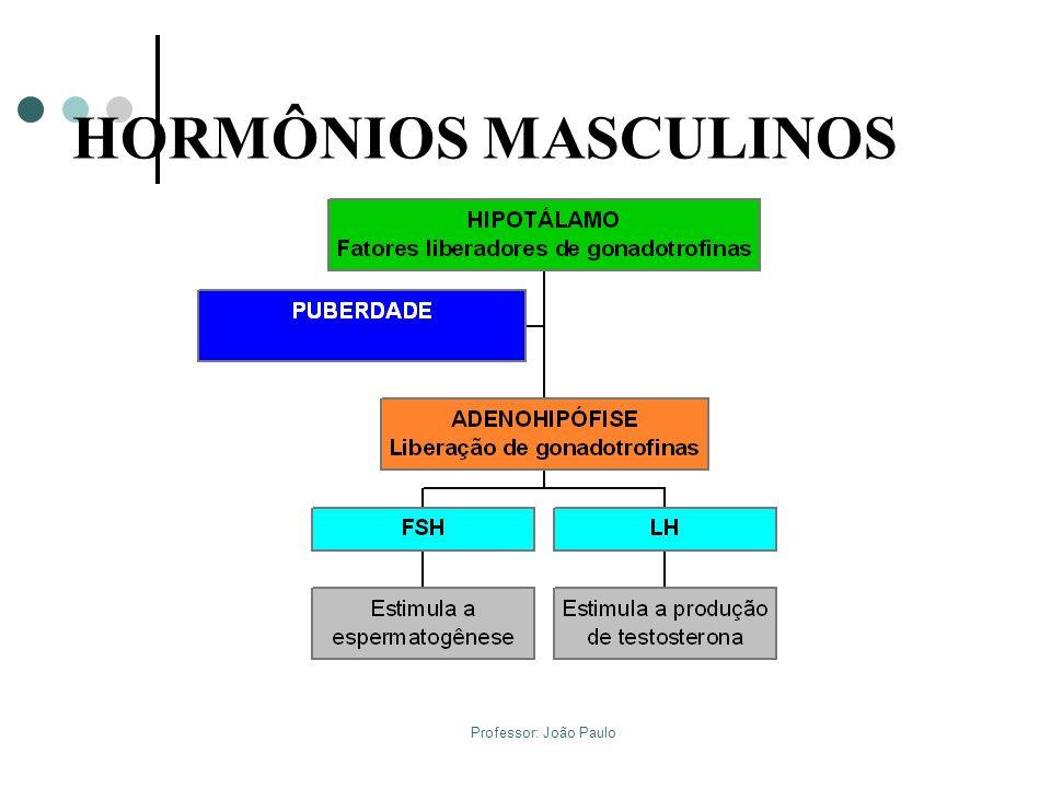HORMÔNIOS MASCULINOS Professor: João Paulo