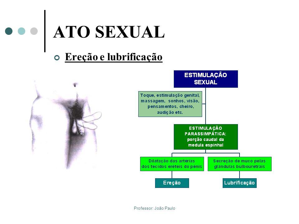 ATO SEXUAL Ereção e lubrificação Professor: João Paulo
