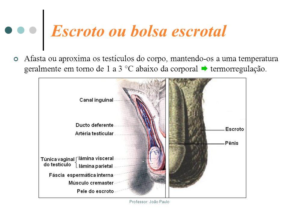Escroto ou bolsa escrotal