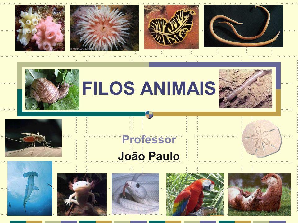 FILOS ANIMAIS Professor João Paulo