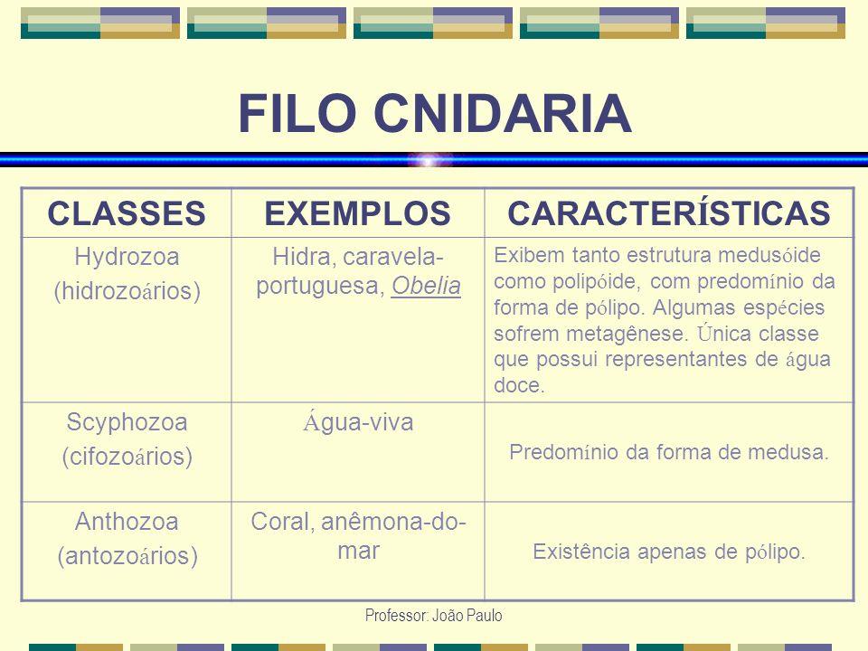 FILO CNIDARIA CLASSES EXEMPLOS CARACTERÍSTICAS Hydrozoa (hidrozoários)