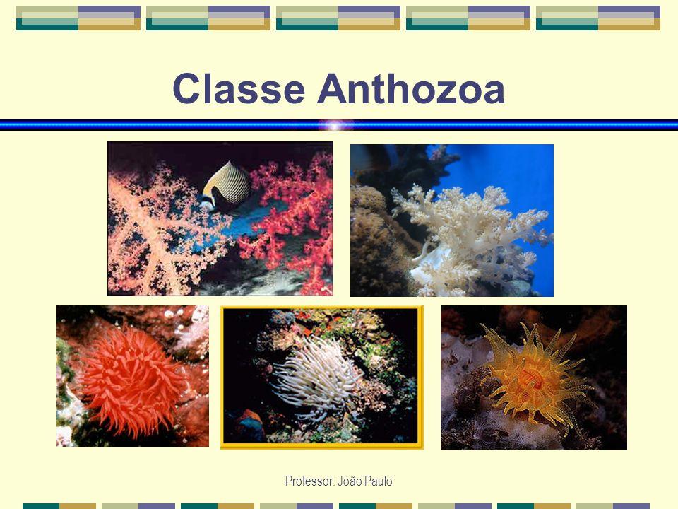 Classe Anthozoa Professor: João Paulo