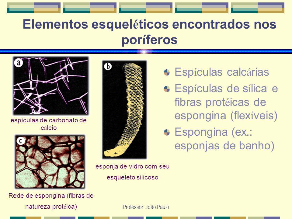 Elementos esqueléticos encontrados nos poríferos