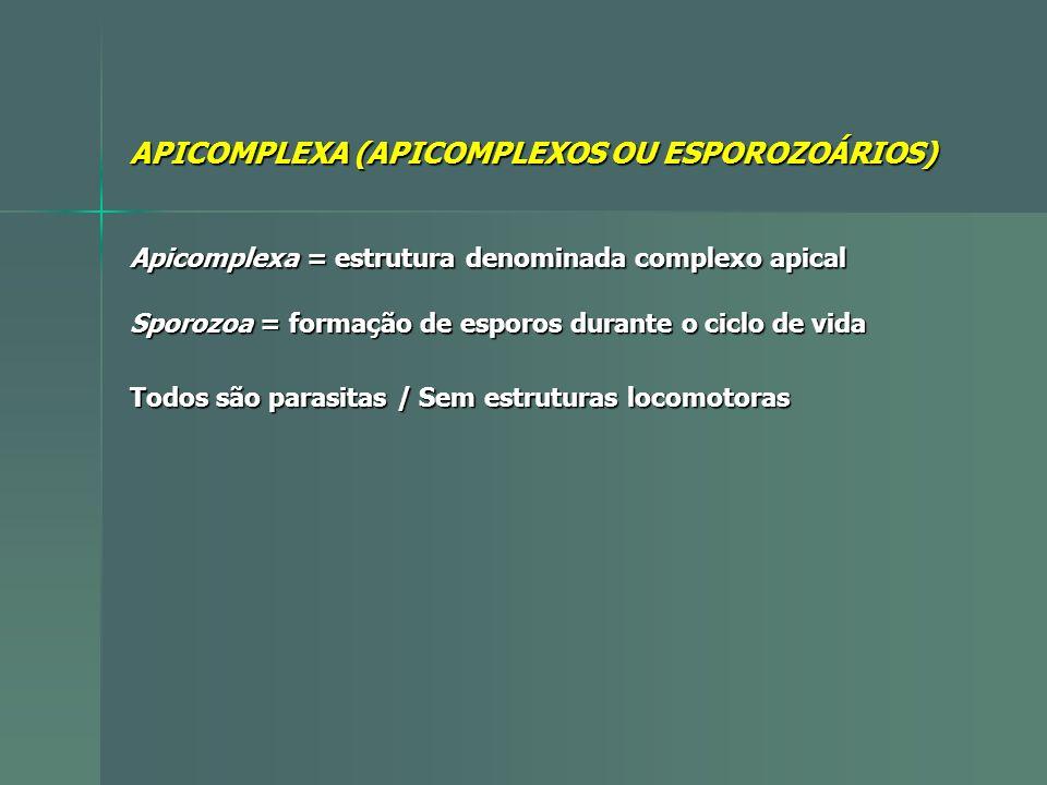APICOMPLEXA (APICOMPLEXOS OU ESPOROZOÁRIOS)