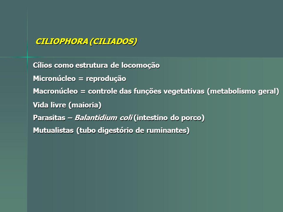 CILIOPHORA (CILIADOS)