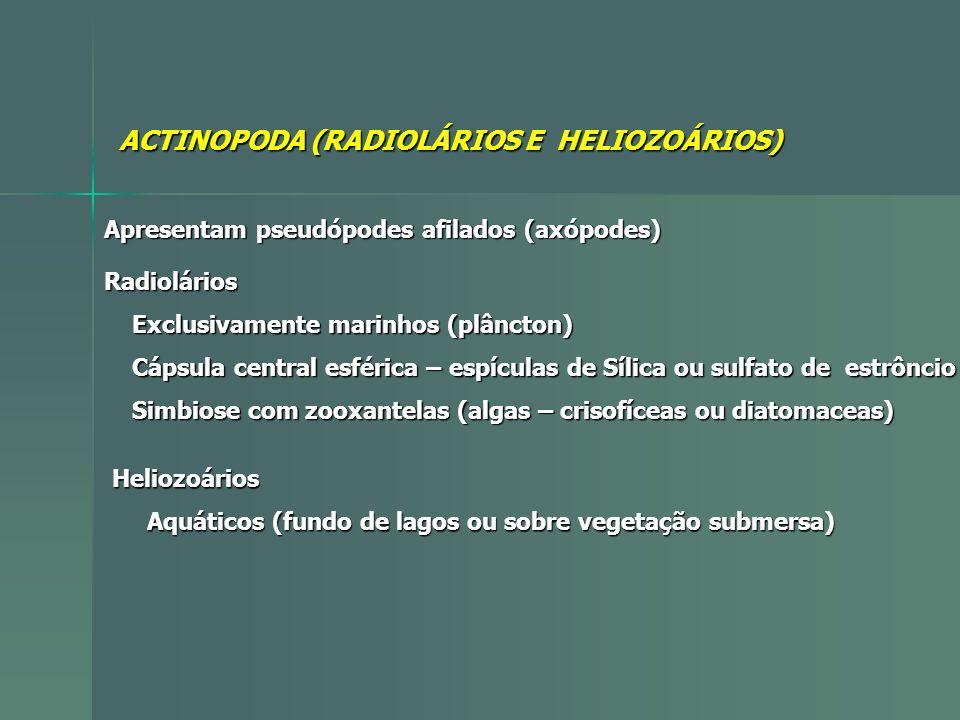 ACTINOPODA (RADIOLÁRIOS E HELIOZOÁRIOS)