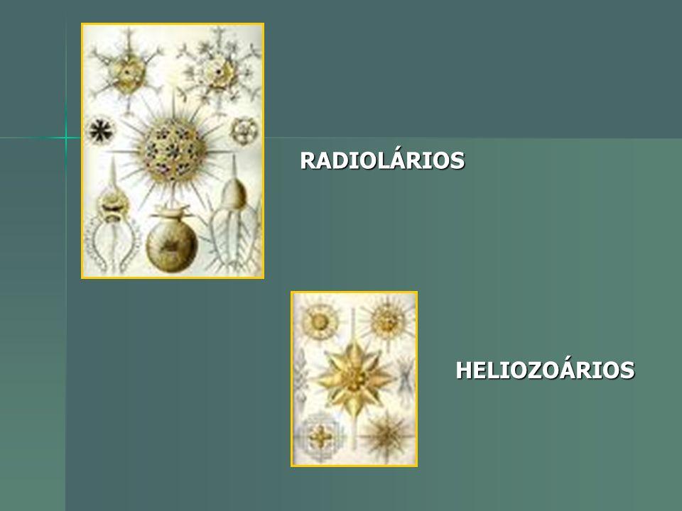 RADIOLÁRIOS HELIOZOÁRIOS