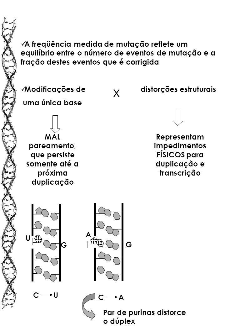A freqüência medida de mutação reflete um equilíbrio entre o número de eventos de mutação e a fração destes eventos que é corrigida