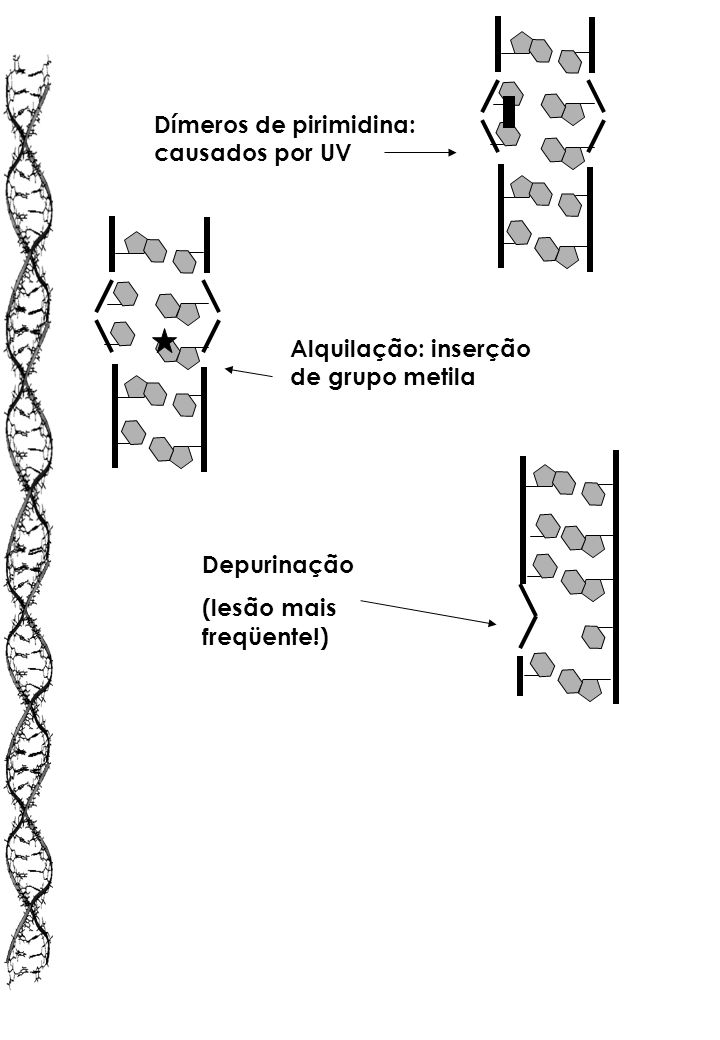 Dímeros de pirimidina: causados por UV
