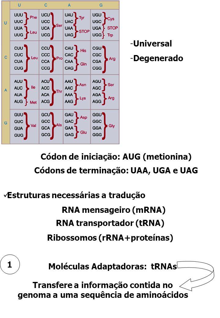 Códon de iniciação: AUG (metionina)