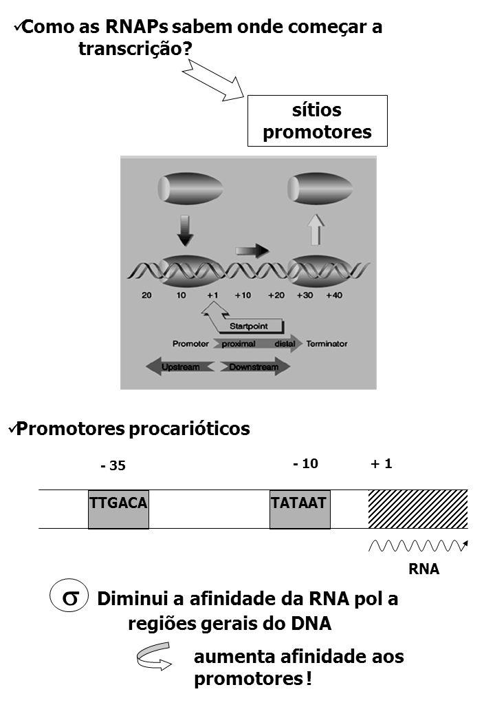  Diminui a afinidade da RNA pol a regiões gerais do DNA