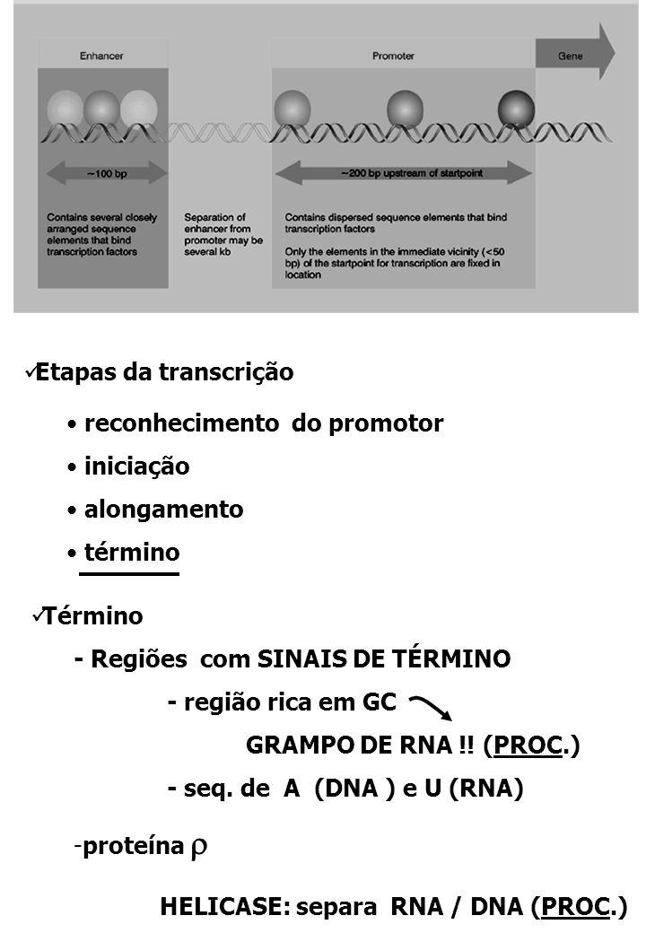 HELICASE: separa RNA / DNA (PROC.)