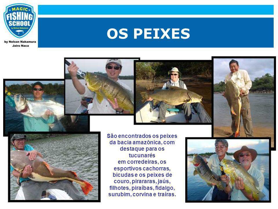 OS PEIXES São encontrados os peixes da bacia amazônica, com