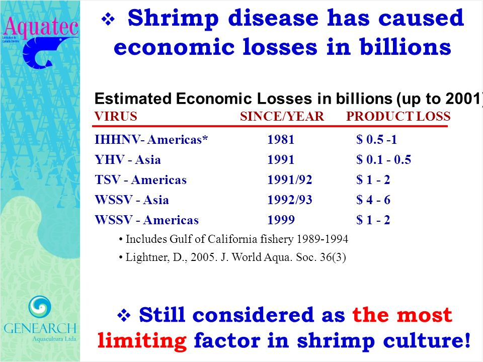 Shrimp disease has caused economic losses in billions