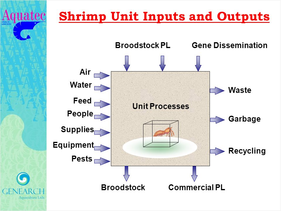 Shrimp Unit Inputs and Outputs