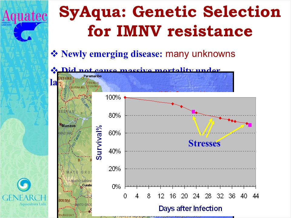 SyAqua: Genetic Selection for IMNV resistance