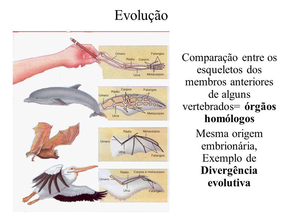 Mesma origem embrionária, Exemplo de Divergência evolutiva